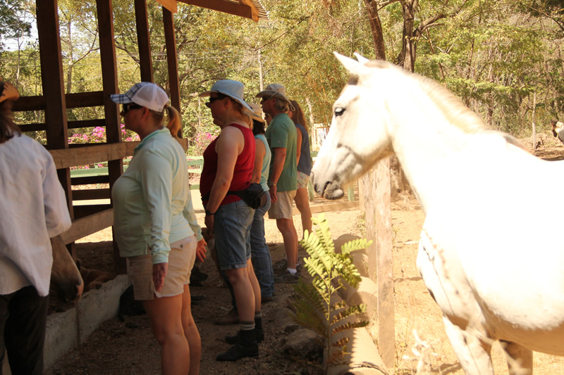 Energetically Meeting the Horses