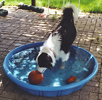 Bandit in his pool