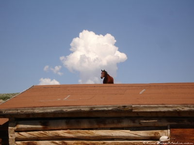 Horse on a Barn Roof
